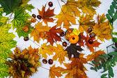 Barevné podzimní listí a kaštany — Stock fotografie