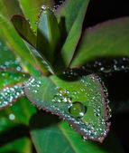 Green leaf with crystal water drops — Stock Photo