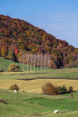Colores de otoño en pirineos — Foto de Stock