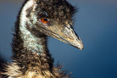 Head of ostrich in zoo — Stockfoto