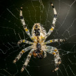 Big spider in its web — Stock Photo #49593815