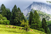 Green pasturage in high Alps — Stock Photo