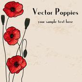 Poppies frame design — Stock Vector
