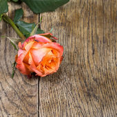 Beautiful roses on a wooden surface. In dark colors.  — Stock Photo