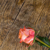 Pink roses on wooden background — Stock Photo