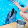 Fragment of the human hand feeding dolphins in a pool — Stock Photo #51572445