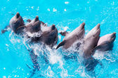 Group of dolphins swimming in the clear blue water of the pool c — Stock Photo