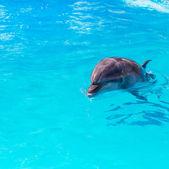 Yunuslarla Yüzme Havuzu yakın çekim — Stok fotoğraf