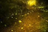 Firefly — Stock Photo