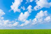 Landscape green field and blue sky  — Foto Stock