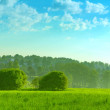 Landscape summer field with trees lit by the sun — ストック写真 #49104509