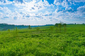 Background landscape field of green grass and blue sky  — Stock Photo