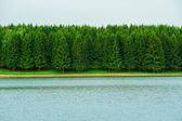 Geometrische achtergrond landschap vuren bos — Stockfoto