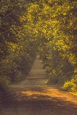Landscape road scenic background of dense trees  — Foto Stock