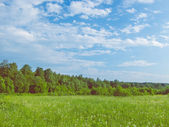 Background picturesque landscape green field  blue sky  and fore — Stock fotografie
