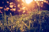 Green grass background macro — Stock Photo