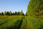 Landscape footpath in a green field — Stock Photo