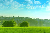 Landscape summer field with trees lit by the sun  — Stock fotografie