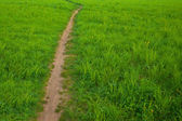 Rural footpath in a field among green grass  — ストック写真
