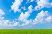 Landscape green field and blue sky  — Stock Photo