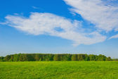 Landscape sunlit green meadow and forest and blue sky  — ストック写真