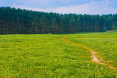 Landscape road in the field leading to the forest  — ストック写真