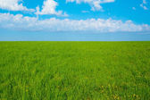 Background landscape field of green grass and blue sky  — ストック写真