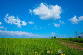 Background picturesque rural landscape path of field  — Stock fotografie