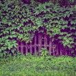 Background old wooden fence overgrown with green ivy leaves — Stock Photo #49262095