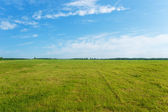 Background green sown field with germinating crops and blue sky  — Stock Photo