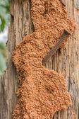 Termite on tree background  — Stock Photo