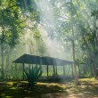 Hut in the forest — Stock Photo #51521559
