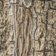 Wood bark — Stock Photo
