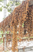 Dried jasmine flower garland hanging on wire — Stock Photo