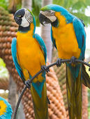 Parrots in landscape tropical park of Nong Nuch in Pattaya, Thailand — Stock Photo