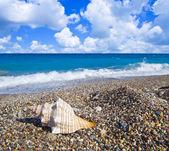 Sea shell on pebble beach — Stock Photo