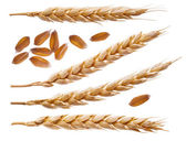 Spikelets and wheat seeds — Stock Photo