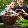 Couple picking mushrooms in the forest — Stock Photo #49688961