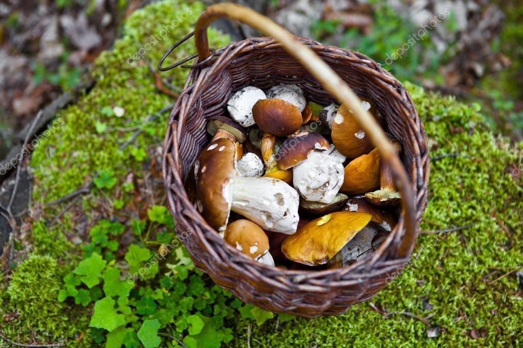 满满一筐拍照在森林里的蘑菇