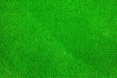 Golf green grass background texture — Stock Photo