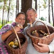Couple picking mushrooms in the forest — Stock Photo #50692961