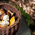 Full basket of mushrooms — Stock Photo #50693105