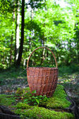 Basket for mushrooms in the woods — Stock Photo