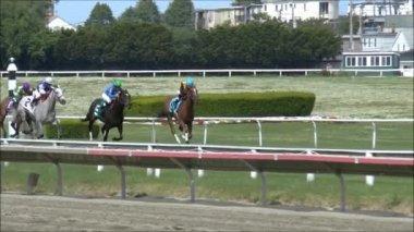 Horse Race winner — Stock Video