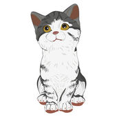 Kitty on a white background — Cтоковый вектор
