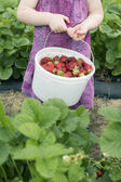 Little girl holding bucket full of strawberries in field — 图库照片