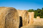 Nerd wheat — Stock Photo