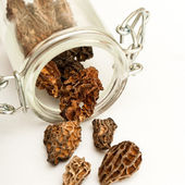 Group of morels dried — Stock Photo