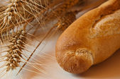 Bread and dried wheat — Stock Photo