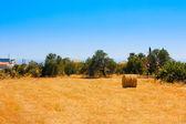 Hay Bale Roll in Field — Stock Photo